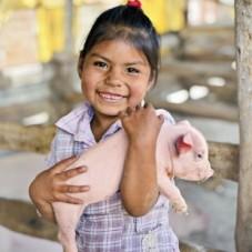 Pig_D4040121
